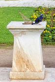Orologio solare e il piccione — Foto Stock