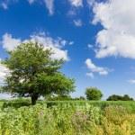 Landscape of zante island nature — Stock Photo #45670105
