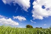 Landscape of a field with grass and clouds — Stock Photo