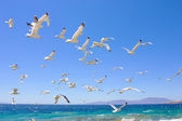 Swarm of flying sea gulls — Stock Photo