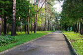 Walk in nature — Stock Photo