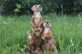 Squirrels in the garden — Stock Photo
