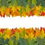 Autumn Border Design — Stock Photo