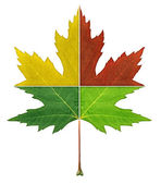 Four Seasons Leaf — Stock Photo