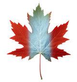 Canada Maple Leaf — Stock Photo
