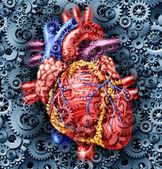 Human Heart Health — Stock Photo