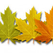 Autumn Border Element — Stock Photo