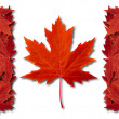 Canada Leaf Flag — Stock Photo #13093541