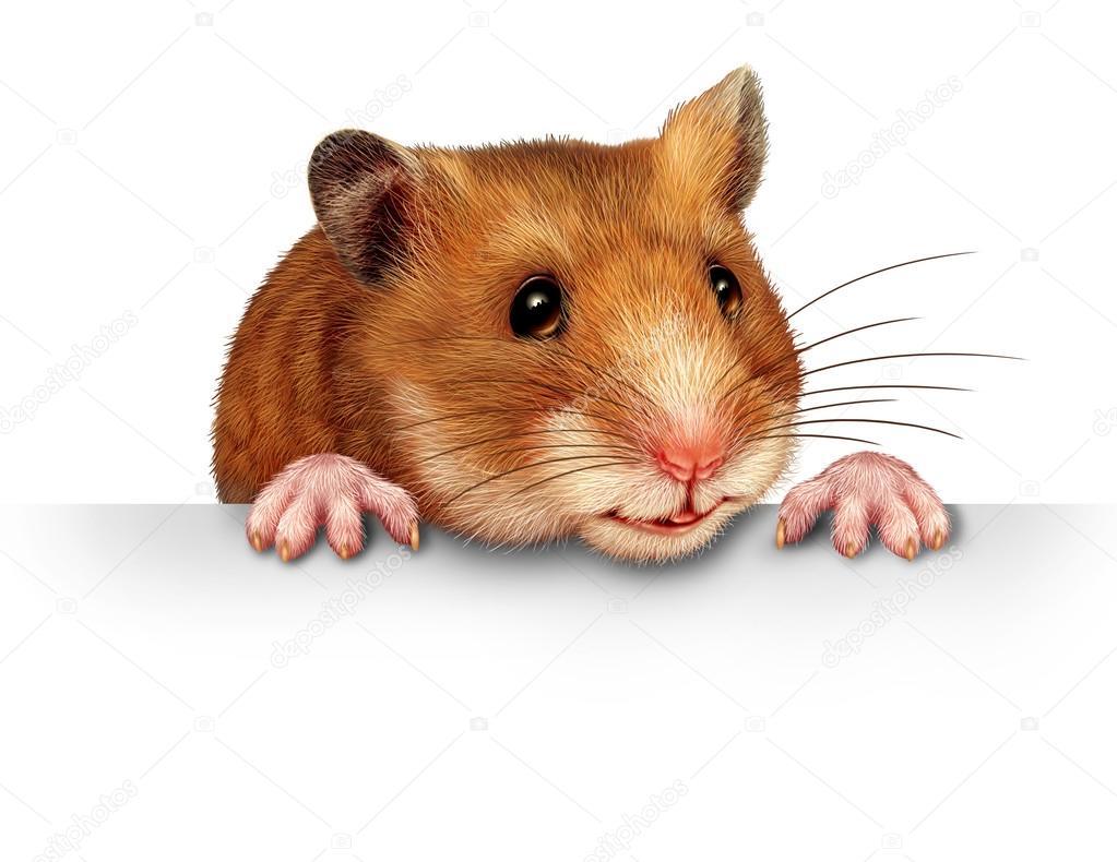 可爱的仓鼠微笑和快乐持空白白色广告牌通报卡与粉红毛茸茸爪子 and