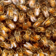 Foto de Stock  : Bees And Beehive Honey