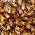 včely a med včelí úl — Stock fotografie