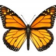Monarch Butterfly - Foto Stock