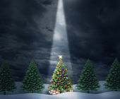 Illuminated Tree — Stock Photo