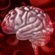 Stock Photo: Brain Blood