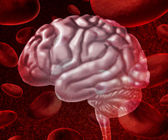 Brain Blood — Stock Photo