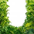 Stock Photo: Tropical Plants Blank Frame
