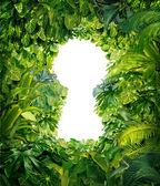 из джунглей — Стоковое фото