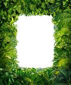 Frontera de la selva — Foto de Stock