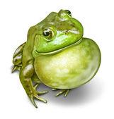 Frosch aufgepumpten kehle — Stockfoto