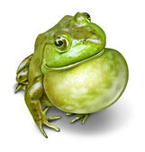 žába nafukuje krk — Stock fotografie