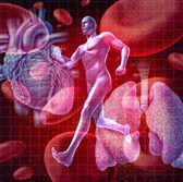 心血管系统 — 图库照片