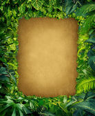 Divoké džungle rám — Stock fotografie