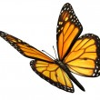 Monarch Butterfly Angled - Stock Photo