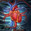 Cardiovascular Human Heart — Stock Photo