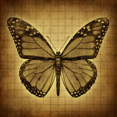 Butterfly Grunge texture — Stock Photo