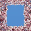 Magnolia Flower Border Frame — Stock Photo