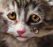 жестокого обращения с животными — Стоковое фото