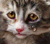 Abuso de animais — Foto Stock