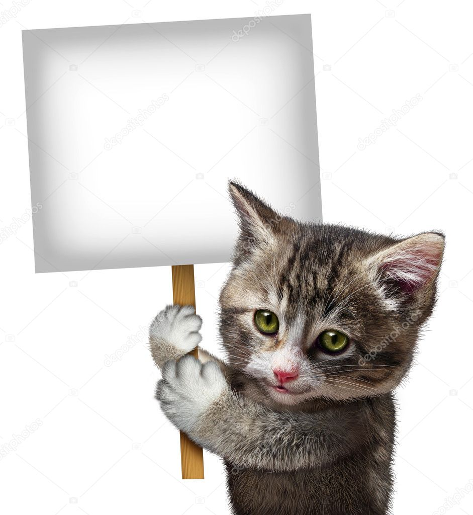 cat holding sign stock photo lightsource 25595013