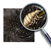 Lice Problem — Stock Photo