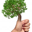 Stock Photo: Green Thumb