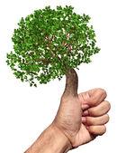 Green Thumb — Stock Photo