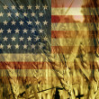 AmericAgriculture — Stock Photo #28950389