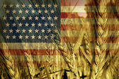 American Agriculture — Stock Photo