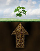 Root Of Success — Stock Photo