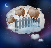 Counting Sheep — Stock Photo