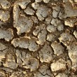 Drought Environment — Stock Photo