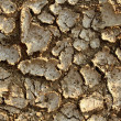 Stock Photo: Drought Environment