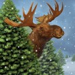 Winter Moose — Stock Photo