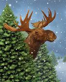 冬のムース — ストック写真