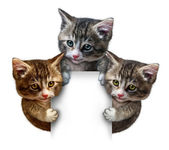 Cat Group Blank sign — Stock Photo