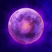 Human Egg Cell — Stock Photo