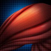 Human Muscle Pain — Stock Photo