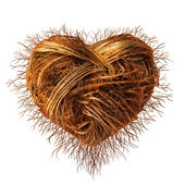 Love Roots — Stock Photo