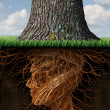 Take Root — Stock Photo