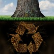 Tree Recycle Symbol — Stock Photo